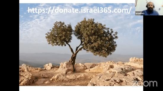 olive-tree-israel365-video