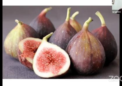 fig-tree-israel365-tour
