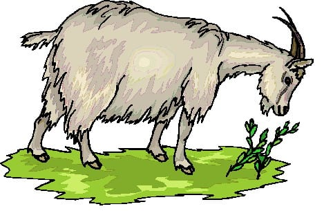 Seder Melodies 12: Chad Gadya / One Little Goat