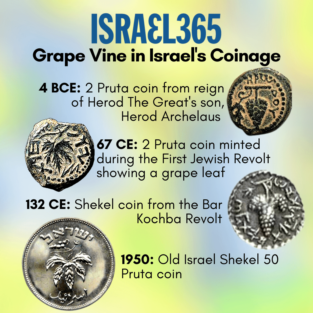 Grapes: Their Hidden Wisdom and Symbolism in Israel's History