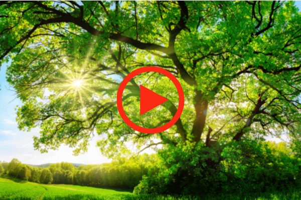 The Spiritual Connection Between Abraham and Trees