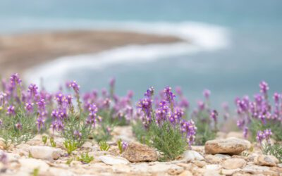 Life at the Dead Sea Shows God is Reversing the Curse of Sodom and Gomorrah