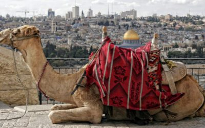 Do Camels Prove the Bible is False?